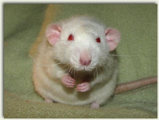 Question existencielle sur les albinos Charlie_portrait